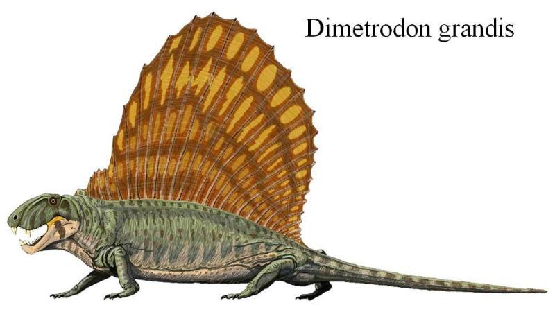 Диментродон Пермского периода