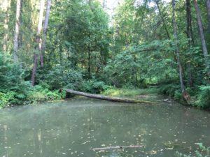 Пруд в лесопарке Кузьминке