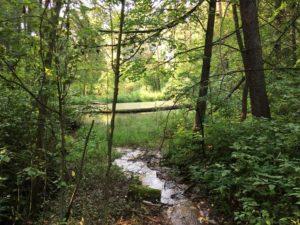 Ручей в лесопарке Кузьминка