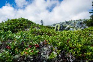 Мир растений на горе Ослянке
