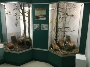 природа в Кудымкарском музее