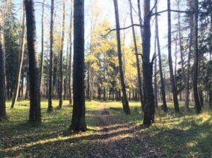 Экологическая тропа Чапаевская в Перми