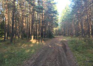 тропа имени лесоводов Прикамья дорога