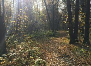 гайвинская тропа в лесу