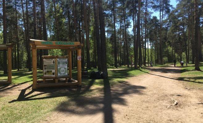 Terra Oecologia в черняевском лесу