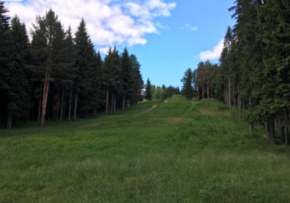 Андроновский лес в Перми