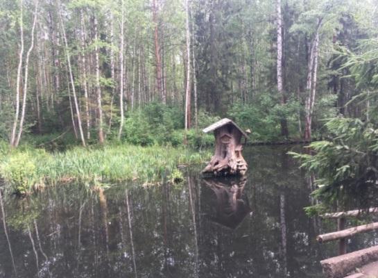 Черняевский лес дом бобра