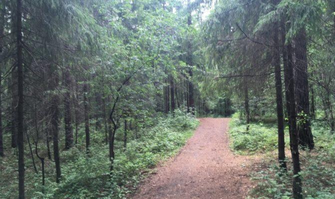 Черняевский лес Пермь
