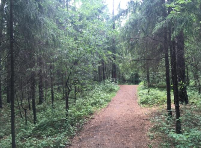 Черняевский лес