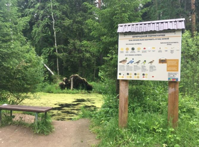 место отдыха в Черняевском лесу