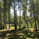 Лужайка в парке Чехова